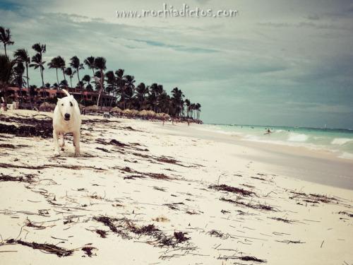 White sand Bavaro