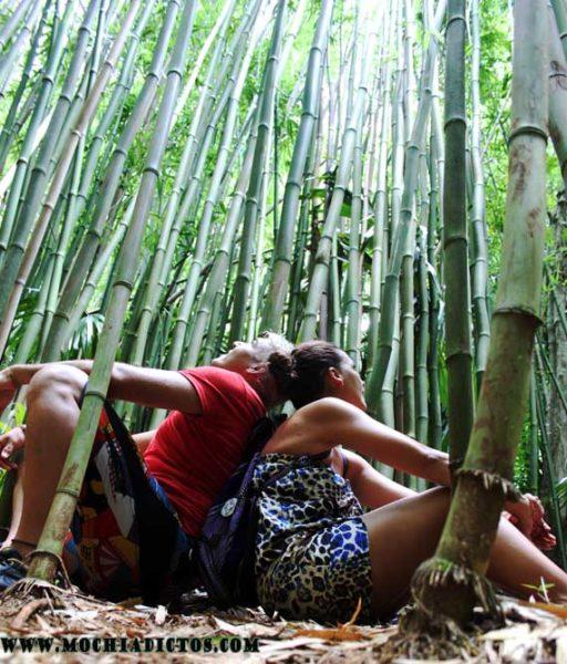 Bambu - copia