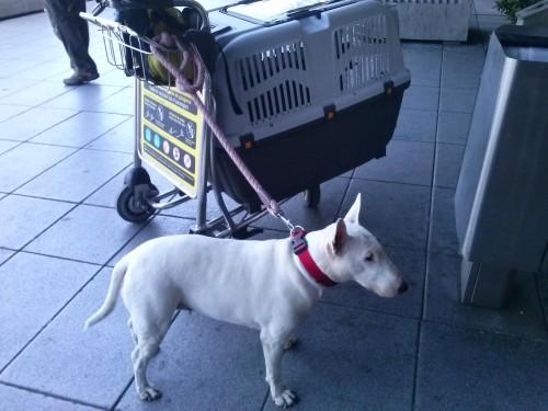 Viajar con perro a Punta Cana