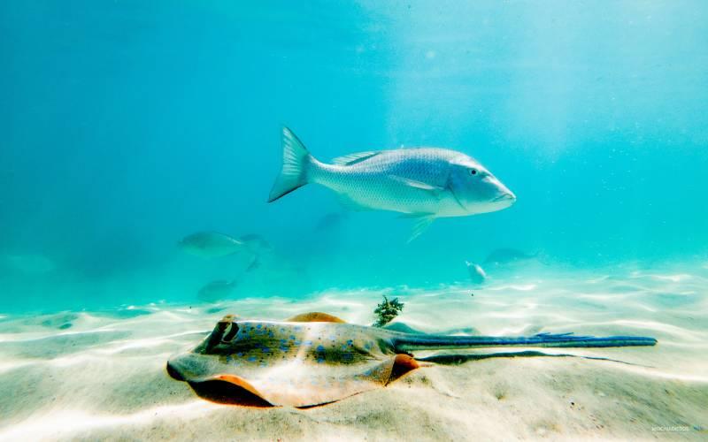 Coral Bay Ruta Western Australia