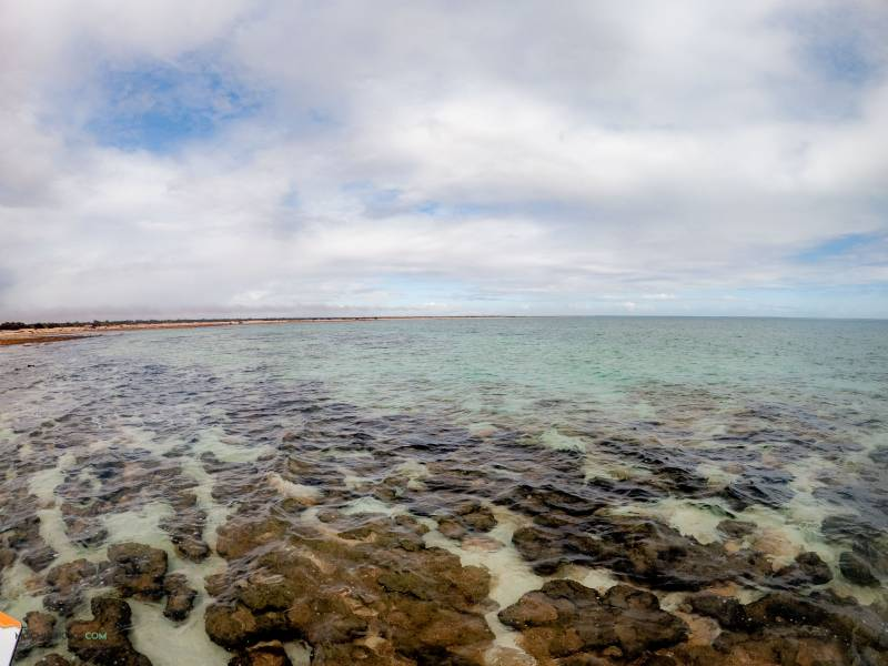Estromatolitos en Hamelin Pool Western Australia