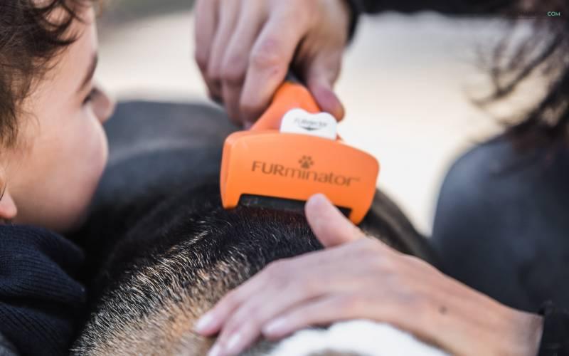 FURminator, eliminar caida del pelo de perro