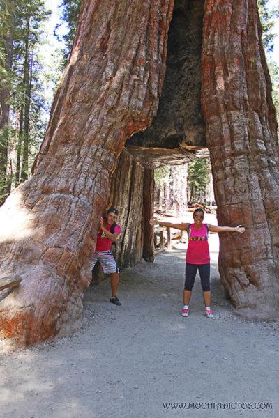 Visitar Yosemite park