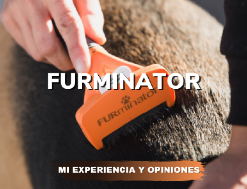 La verdad sobre como usar FURminator perros: Opiniones y mi experiencia.