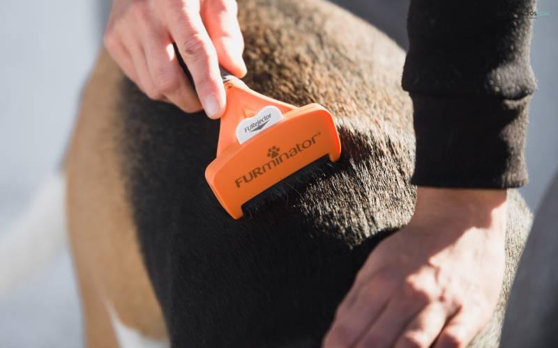 Como usar Furminator para perros
