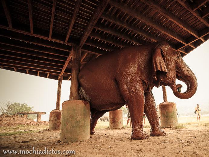 El dia que me bañe con elefantes,Mochiadictos
