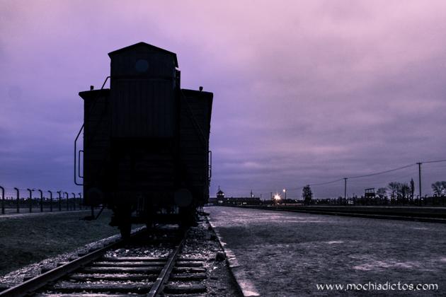 _MG_5009