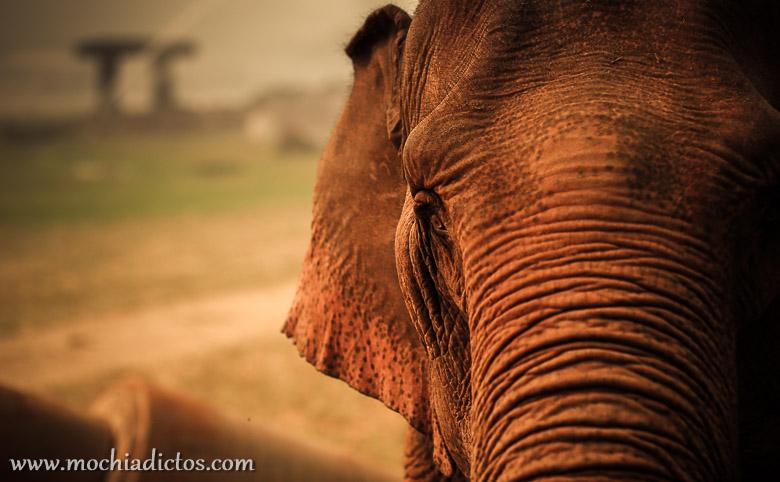 Bañarse con elefantes en Chiang Mai, Tailandia.