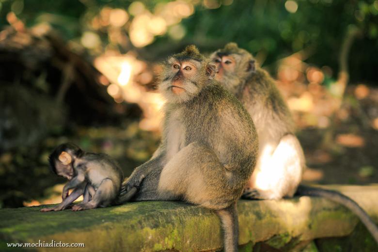 Mochiadictos en Bali 2015-6