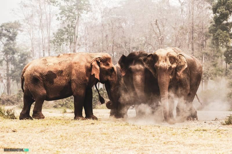 Que hacer en Tailandia, Elefantes Chiang Mai