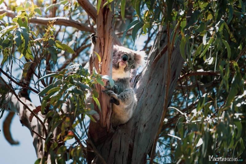 Que ver en la Great Ocean Road, Australia. www.mochiadictos.com-32