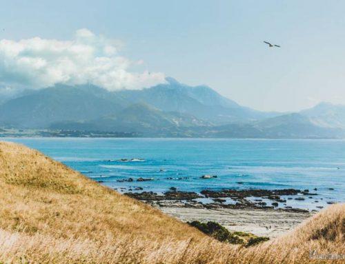 Kaikoura ¡Qué saber antes de ir! | Ruta por Nueva Zelanda días 16 y 17.
