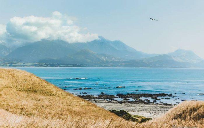 Kaiokura, Nueva Zelanda Que ver y hacer