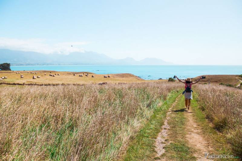 Que ver y hacer en Kaiokura, Nueva Zelanda.