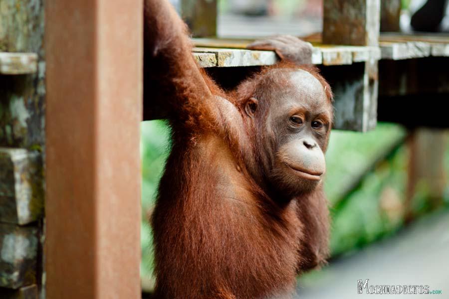 Que ver y que hacer en Borneo, Malasia. www.Mochiadictos (1)