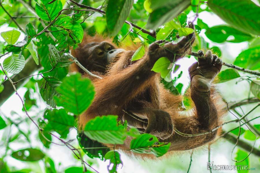 Que ver y que hacer en Borneo, Malasia. www.Mochiadictos (2)