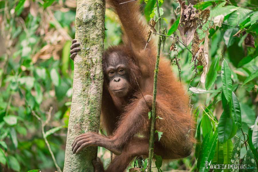 Que ver y que hacer en Borneo, Malasia. www.Mochiadictos (3)
