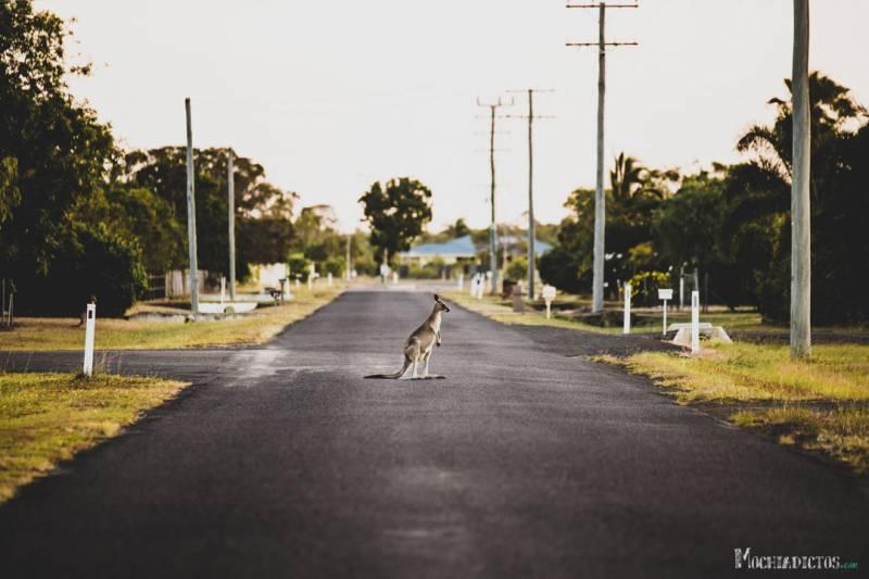 Ruta costa este de Australia