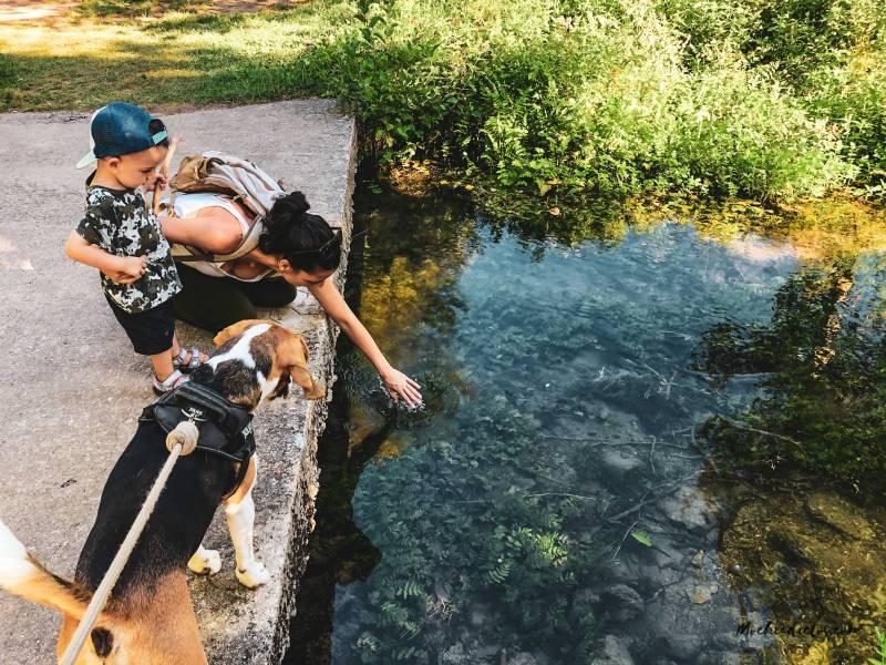 consejos para viajar a Bosnia con perro