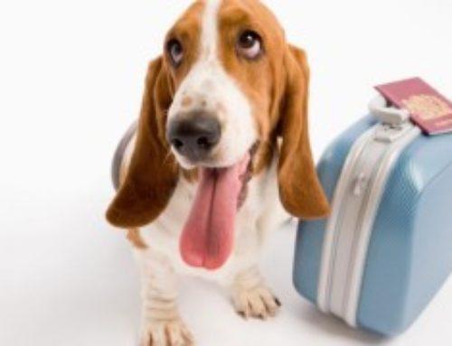 Requisitos para viajar con perro desde Reino Unido al resto de Europa