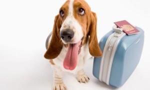 viajar con perro desde Reino Unido a Europa